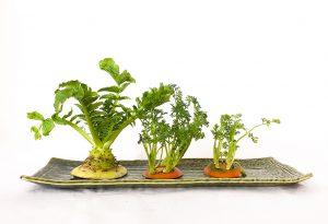 賃貸でも手軽にできる水耕栽培の家庭菜園_2
